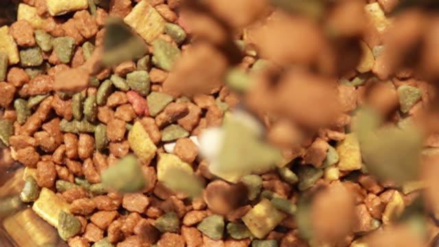 vídeos de stock e filmes b-roll de closeup scene of pouring pet food to the floor in slow motion - dog food