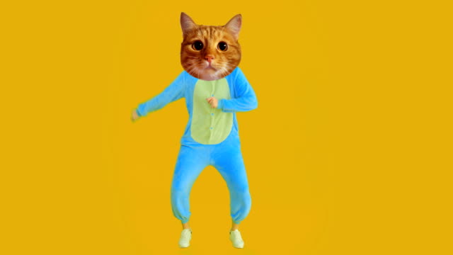 closeup shoot of funny girl with cat head and costume dancing with the background isolated on yellow - gif filmów i materiałów b-roll