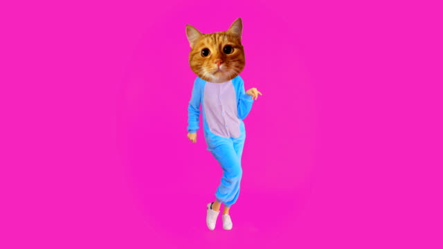 closeup shoot of funny girl with cat head and costume dancing with the background isolated on pink - gif filmów i materiałów b-roll