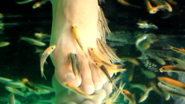 Close-up shot feet in aquarium with fish. Spa pedicure and treatment video