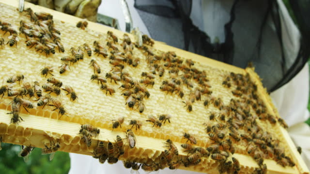 close-up shot of a beekeeper wearing gloves removing a frame with honeycomb out of a beehive using a frame grip outdoors next to a house - favo video stock e b–roll
