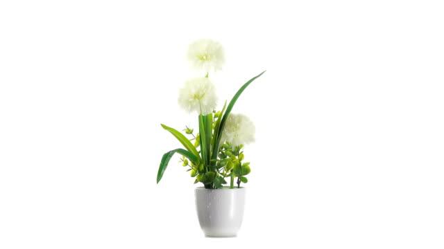 closeup shot of artificial flowers with droplet on white background. flower turning slowly - wytworzony przedmiot filmów i materiałów b-roll