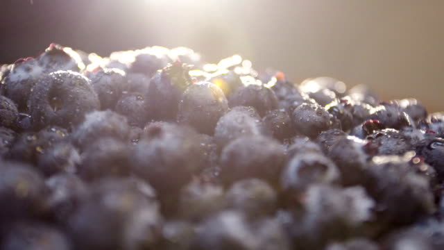 Closeup shot of fresh blueberries at brunch. video