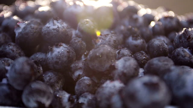 Closeup shot of freshly picked organic blueberries video