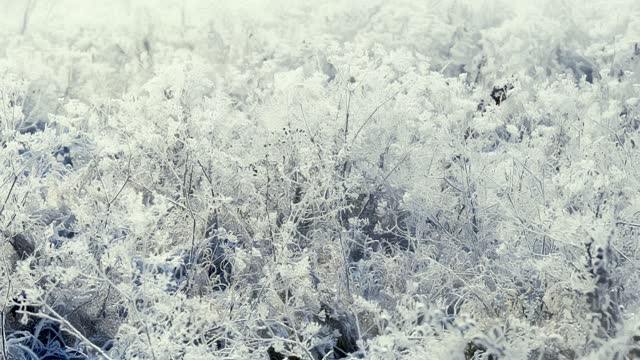 eine nahaufnahme von gefrorenem gras auf einem mit frost und schnee bedeckten und am frühen frostigen morgen von der sonne beleuchtet. es liegt ein frostiger dunst in der luft. - schneeflocke sonnenaufgang stock-videos und b-roll-filmmaterial