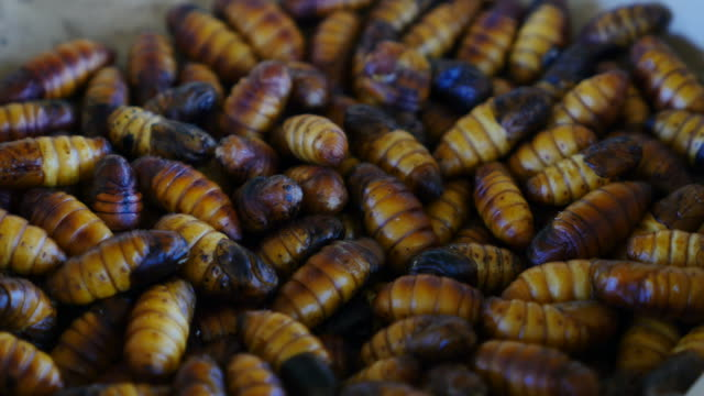 Close-up silkworm. video