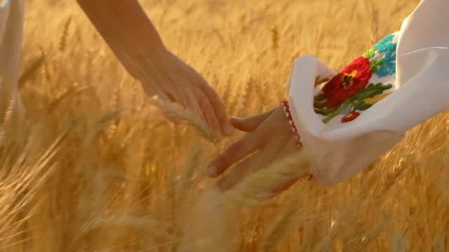 close-up, slow motion, an die händen von zwei frauen in ländlichen gebieten zu fuß im feld streicheln wachsen weizen ährchen dämmern - haarfarbe stock-videos und b-roll-filmmaterial