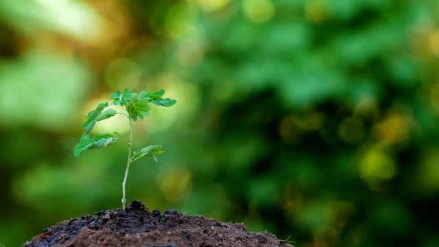 Close-up Small Plant with Green Nature Background video