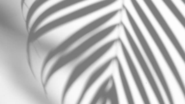 closeup the motion of shadow palm leaf is tropical leaves on white wall background, 4K Resolution