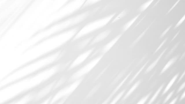 白い壁の背景に影のヤシの葉の動きを閉じます。 - 影点の映像素材/bロール