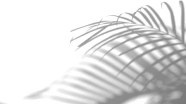primo piano il movimento di foglia di palma ombra su uno sfondo bianco parete. - ramo parte della pianta video stock e b–roll