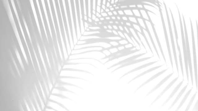 vídeos de stock e filmes b-roll de closeup the motion of shadow palm leaves on a white wall background. - leaf