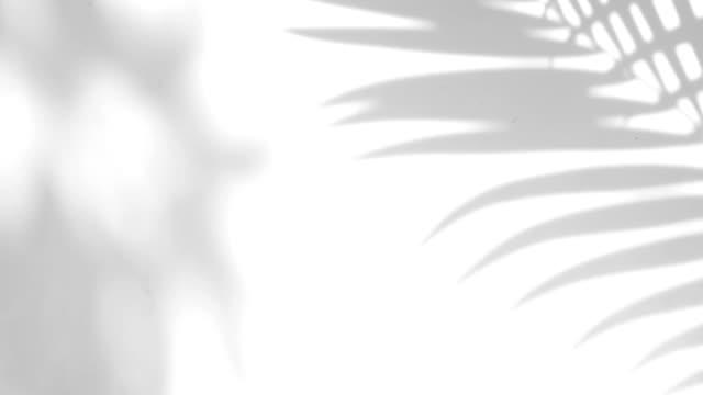 nahaufnahme der bewegung des schattens palm lässt auf eine weiße wand hintergrund. - palme stock-videos und b-roll-filmmaterial