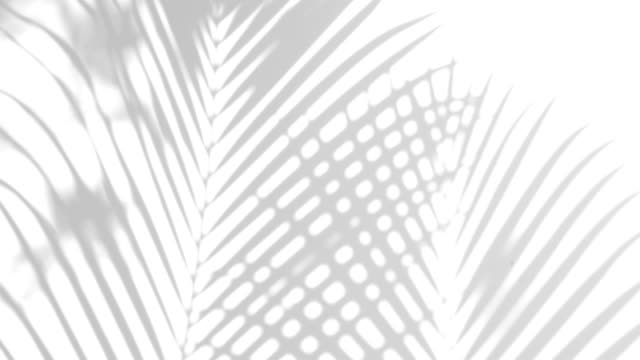 closeup the motion of shadow palm leaves on a white wall background. 4k - albero tropicale video stock e b–roll