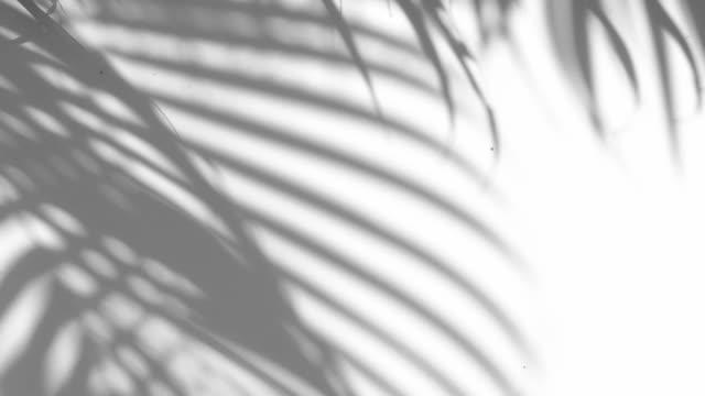 特寫在白色牆背景上的陰影棕櫚葉的運動。 - 影 個影片檔及 b 捲影像