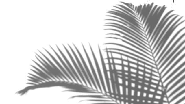 在白色牆壁背景上特寫陰影棕櫚葉的運動。 - 影 個影片檔及 b 捲影像