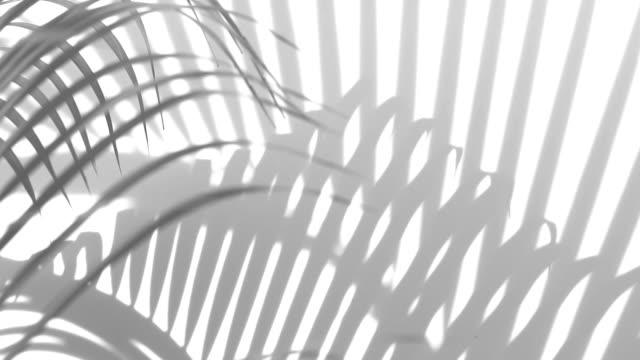 クローズ アップ影手のひらの動きは、白い壁の背景に残します。 - 春のファッション点の映像素材/bロール