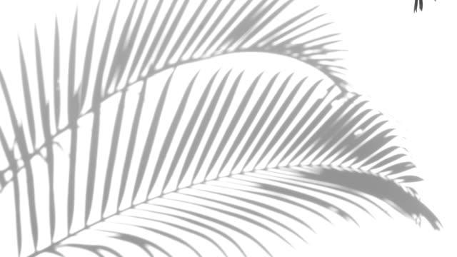 closeup the motion of shadow palm leaves on a white wall background. - palm tree filmów i materiałów b-roll