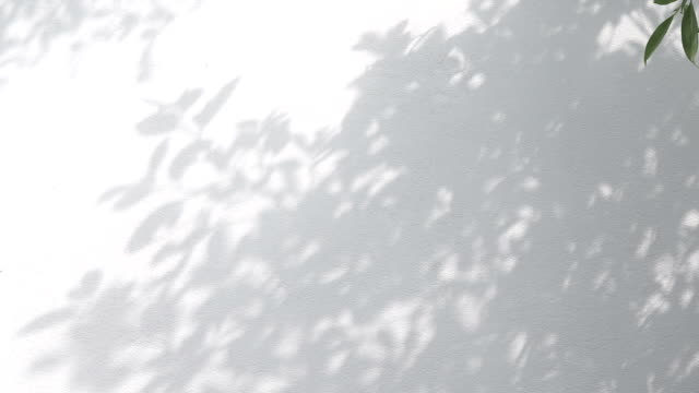 closeup the motion of shadows leaf with blowing wind on a white wall background.