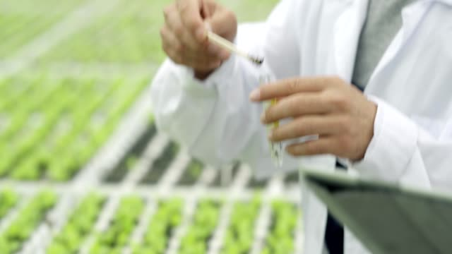 close-up tilt up of young agricultural scientist taking soil sample from pot with leaf vegetable sprouts growing in commercial hothouse, putting soil into test tube and analyzing results with female colleague - bio food video stock e b–roll
