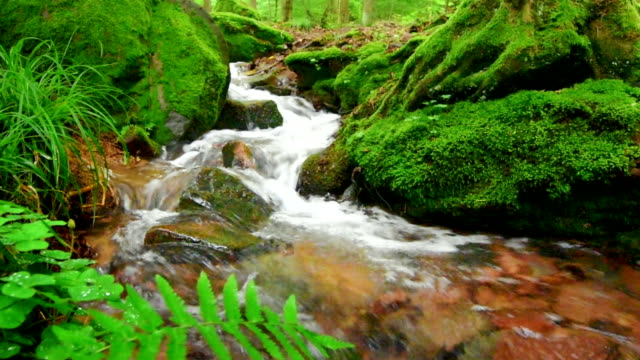 Closeup video of a forest brook with moss covered surroundings