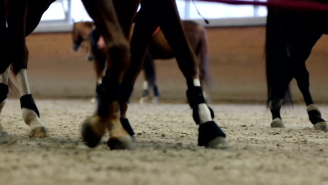 Close-up view on the hooves of horses running through a dusty field. video