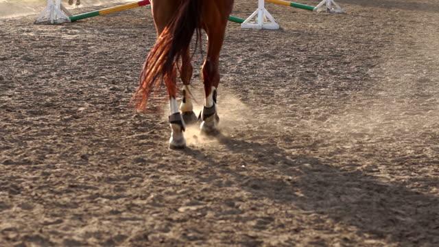 närbild på hovarna av hästen vid solnedgången - hästhoppning bildbanksvideor och videomaterial från bakom kulisserna