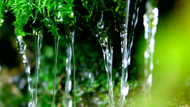 close-up water flowing from green moss - muschio flora video stock e b–roll