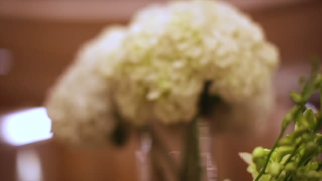 close-up white flowers. stock. holiday flowers in vase. flower decorations on the wedding tables - триллиум стоковые видео и кадры b-roll