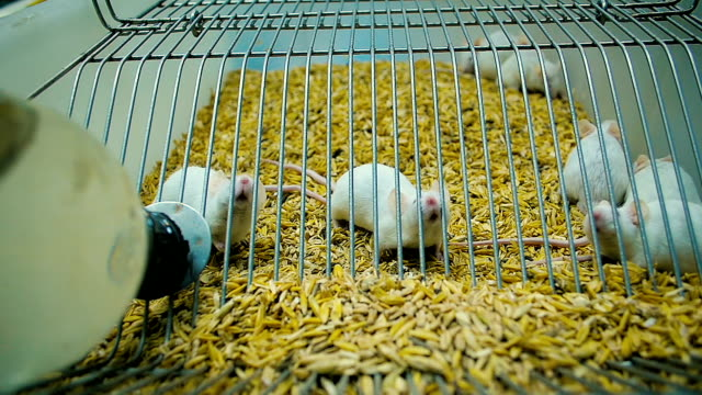 Best Mouse Cage Stock Videos and Royalty-Free Footage - iStock