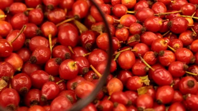 虫眼鏡でクローズ アップ。新鮮な収穫ローズヒップの果実の回転 - イヌバラ点の映像素材/bロール