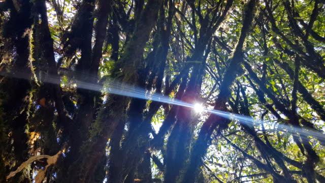 生物保護区モンテベルデの雲の森、コスタリカ ビデオ