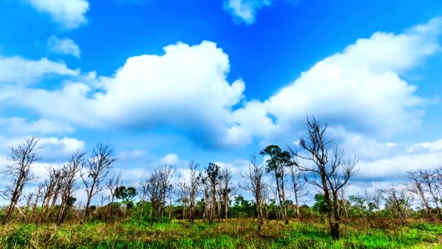 Cloud runs through drought. video