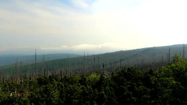 stockvideo's en b-roll-footage met cloud time lapse met dode bomen, verre heuvel en mist van tristolicnik. nationaal park sumava en het beierse woud, tsjechië en duitsland - schors