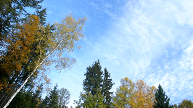 Clouds flying on blue sky and autumn forest time-lapse video