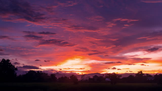 Clouds moving and Sunset on green paddy rice field Time lapse. video