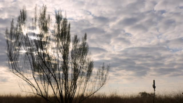 Clouds Moving Behind Small Bush Tree video