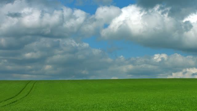 Wolken bewegen sich im Frühjahr über Maisfeld – Video