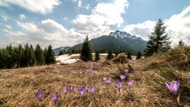 wolken über den bergen frühlingswiese mit krokusblüten. zeitraffer dolly schuss - slowakei stock-videos und b-roll-filmmaterial