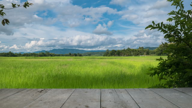 Clouds moving over the green rice field with wood texture