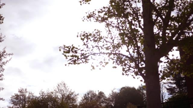 vídeos y material grabado en eventos de stock de nubes que pasan por encima del amanecer dorado en el área de la naturaleza - estilo de vida rural