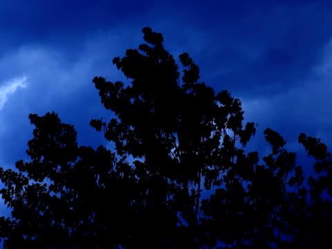clouds timelapse - 枝 植物部分 個影片檔及 b 捲影像