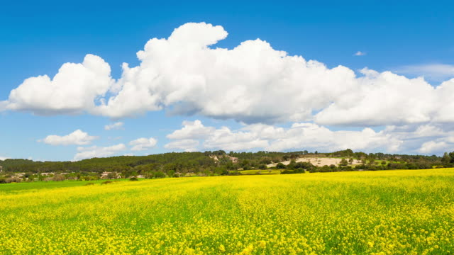 Clouds to pass on a rape field - Time Lapse video