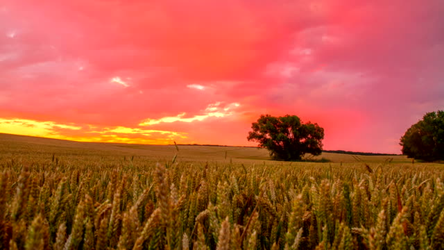 T/L Cloudscape Over Wheat Field At Sunrise