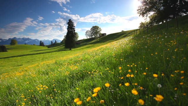 cloudscape with blooming summer meadow in bavaria, germany video