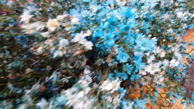 Clover flower close up. Wild flowers.
