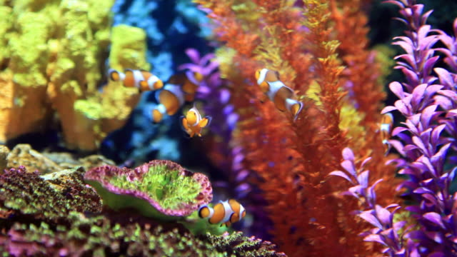 clownfish - akvarium byggnad för djur i fångenskap bildbanksvideor och videomaterial från bakom kulisserna