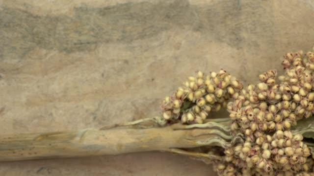 cluster of white sorghum seeds on textured bark paper background - gluten free stock videos and b-roll footage