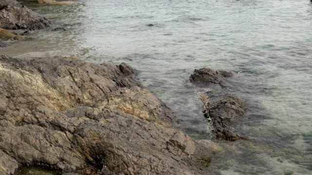 Coast Trail tide pools Becher Bay First Nations seal petroglyph Sooke Vancouver Island British Columbia video