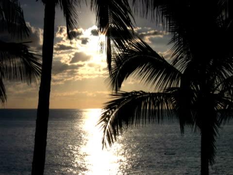 ntsc: coast - 枝 植物部分 個影片檔及 b 捲影像